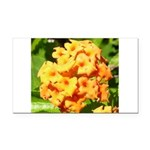 Lantana Orange Explosion Cluster Rectangle Car Mag