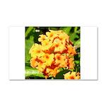 Lantana Orange Explosion Cluster Car Magnet 20 x 1