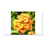 Lantana Orange Explosion Cluster Car Magnet 20 x 1