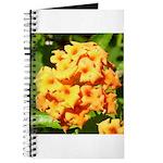 Lantana Orange Explosion Cluster Journal