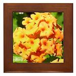 Lantana Orange Explosion Cluster Framed Tile