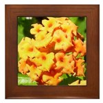 Lantana Orange Explosion Cluster Framed Tile