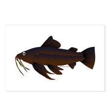 Armored Catfish fish Postcards (Package of 8)