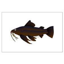 Armored Catfish fish Posters