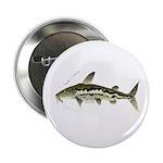 Spotted Sorubim (Shovelnosed Catfish) 2.25