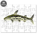 Spotted Sorubim (Shovelnosed Catfish) Puzzle