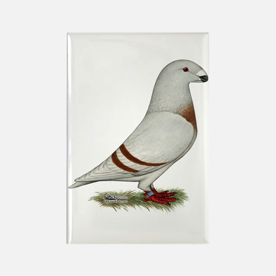 Show Racer Red Bar Pigeon Rectangle Magnet