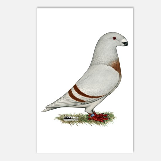 Show Racer Red Bar Pigeon Postcards (Package of 8)
