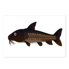 Amazon Ripsaw Catfish fish Postcards (Package of 8