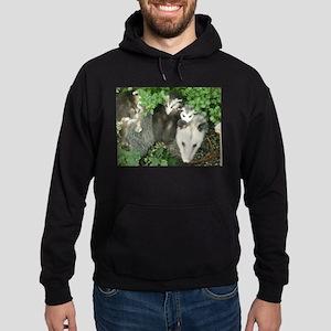mother opossum in garden with babies fa Sweatshirt