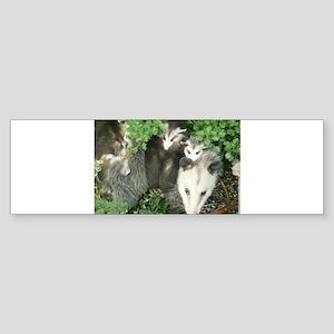 mother opossum in garden with babie Bumper Sticker