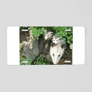 mother opossum in garden wi Aluminum License Plate