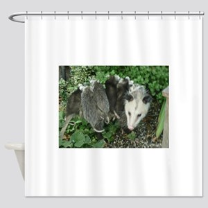 mother opossum with babies in garde Shower Curtain
