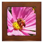 Honey Bee on Pink Wildflower Framed Tile