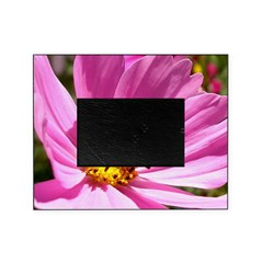 Honey Bee on Pink Wildflower Picture Frame