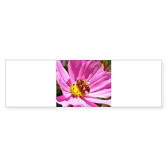 Honey Bee on Pink Wildflower Bumper Sticker