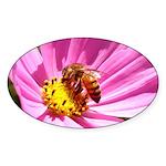Honey Bee on Pink Wildflower Sticker (Oval 10 pk)