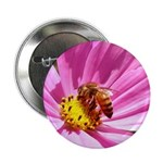 Honey Bee on Pink Wildflower 2.25