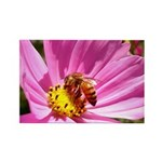Honey Bee on Pink Wildflower Rectangle Magnet