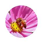 Honey Bee on Pink Wildflower 3.5