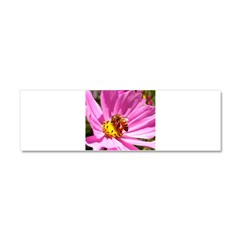 Honey Bee on Pink Wildflower Car Magnet 10 x 3