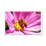 Honey Bee on Pink Wildflower Car Magnet 20 x 12