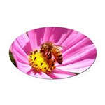 Honey Bee on Pink Wildflower Oval Car Magnet