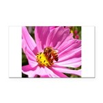 Honey Bee on Pink Wildflower Rectangle Car Magnet