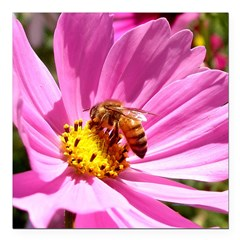 Honey Bee on Pink Wildflower Square Car Magnet 3