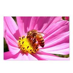 Honey Bee on Pink Wildflower Postcards (Package of