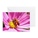 Honey Bee on Pink Wildflower Greeting Cards (Pk of