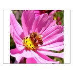 Honey Bee on Pink Wildflower Small Poster