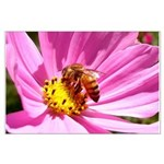Honey Bee on Pink Wildflower Large Poster