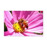 Honey Bee on Pink Wildflower Mini Poster Print