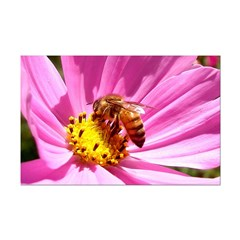 Honey Bee on Pink Wildflower Posters