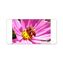 Honey Bee on Pink Wildflower Aluminum License Plat