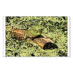 Bullfrog in green is King Sticker (Rectangle 10 pk