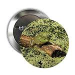 Bullfrog in green is King 2.25