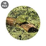 Bullfrog in green is King 3.5