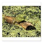 Bullfrog in green is King Square Car Magnet 3