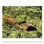 Bullfrog in green is King Square Car Magnet 3