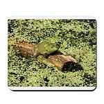 Bullfrog in green is King Mousepad