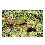 Bullfrog in green is King Postcards (Package of 8)