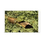 Bullfrog in green is King 20x12 Wall Decal
