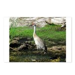 Sandhill Crane on Patrol LS Postcards (Package of
