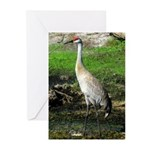 Sandhill Crane on Patrol LS Greeting Cards (Pk of