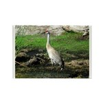 Sandhill Crane on Patrol LS Rectangle Magnet (10 p