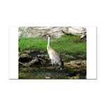 Sandhill Crane on Patrol LS Rectangle Car Magnet