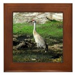 Sandhill Crane on Patrol LS Framed Tile