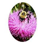 Bumble bee on Magenta Thistle Flower Ornament (Ova